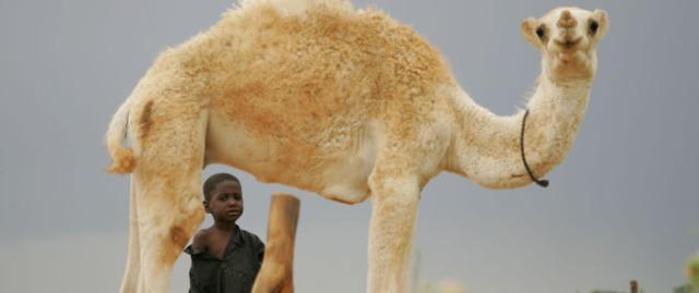 Niger; Fakara;  nr Katanga village